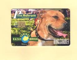 "CHIPCARD SPAIN P426 SERIE ""RAZAS CANINAS IBERICAS - PRESA MALLORQUIN""  - EX: 4.100 - USED - Emissions Privées"