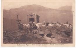 05 Hautes Alpes - Vallée Et Gorges Du QUEYRAS - Troupeau De Chèvres Dans La Haute Montagne -  La Route Des Alpes - Elevage