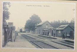 Kapellenbos Cappellen Bosch La Gare Avec Train De Statie Met Trein (heide) (Reproduction - Photo) - Kapellen