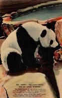 """Happy"" - The Giant Panda - Zoo St. Louis, Missouri - St Louis – Missouri"