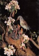 CPM - Grives Litorne - Turdus Pilaris L - Oiseaux