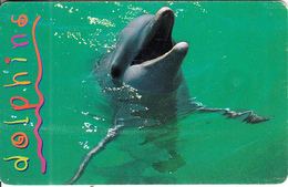 SOUTH AFRICA(chip) - Dolphins 4, MTN Telecard, Chip SO3, Used - South Africa
