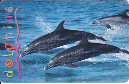 SOUTH AFRICA(chip) - Dolphins 3, MTN Telecard, Chip SO3, Used - South Africa