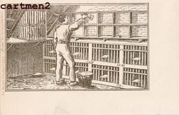 LE SPORT COLOMBOPHILE AVANT LES ACCOUPLEMENTS PIGEONS ELEVAGE METIER COLOMBE 1900 - Métiers