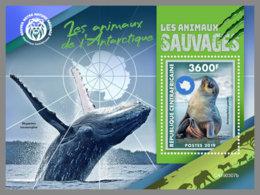 CENTRAL AFRICA 2019 MNH Antarctic Animals Tiere Der Antarktis Animaux De Antarctique S/S - IMPERFORATED - DH1922 - Antarctic Wildlife