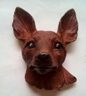 Dog - Animaux & Faune
