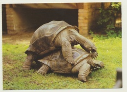 AK  Zoo Tierpark Dresden Seychellen Riesenschildkröten - Tortues