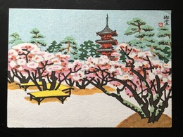 Postal Japon Cherry Blossoms At Ninnaji Temple. - Kyoto