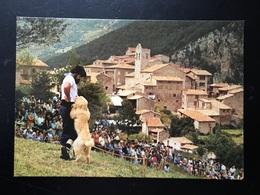 Postal Alto Bergadá Concurso Internacional De Gossos D,atura.  Castellar De N, Huig . - Barcelona