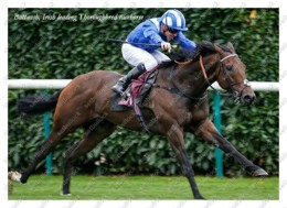 Ukraine | Postcard | Battaash | Leading Thoroughbred Racehorse | Horse - Chevaux