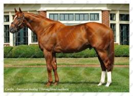 Ukraine | Postcard | Curlin | Leading Thoroughbred Racehorse | Horse - Chevaux