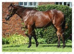 Ukraine | Postcard | Dubawi | Leading Thoroughbred Racehorse | Horse - Chevaux