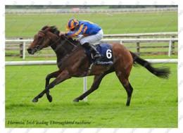 Ukraine | Postcard | Hermosa | Leading Thoroughbred Racehorse | Horse - Chevaux