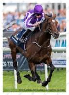 Ukraine | Postcard | Kew Gardens | Leading Thoroughbred Racehorse | Horse - Chevaux