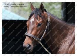 Ukraine | Postcard | Lady Aurelia | Leading Thoroughbred Racehorse | Horse - Chevaux