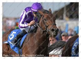 Ukraine | Postcard | Magna Grecia | Leading Thoroughbred Racehorse | Horse - Chevaux