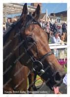 Ukraine | Postcard | Nausha | Leading Thoroughbred Racehorse | Horse - Chevaux