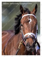 Ukraine | Postcard | Onlyforyou | Leading Thoroughbred Racehorse | Horse - Chevaux
