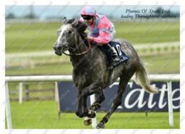 Ukraine | Postcard | Phoenix Of Spain | Leading Thoroughbred Racehorse | Horse - Chevaux