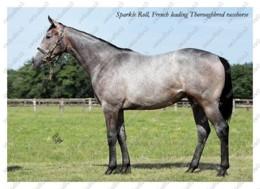 Ukraine | Postcard | Sparkle Roll | Leading Thoroughbred Racehorse | Horse - Chevaux