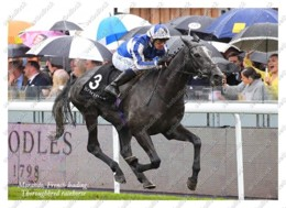 Ukraine | Postcard | Morando | Leading Thoroughbred Racehorse | Horse - Chevaux