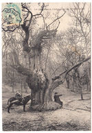 CPA Robinson, Le Plus Vieux, Chataignier De Robinson, Gel. 1906 - France