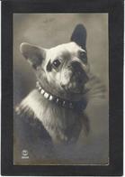 CPA Bouledogue Français French Bulldog Chien Non Circulé - Cani