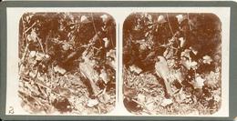 Merkelbach, Vogels, Nesten, Roodborstje - Stereoscoopen