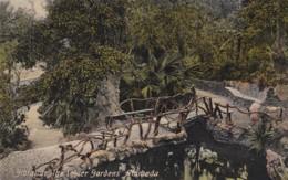 GIBRALTER - ALAMEDA - THE LOWER GARDENS - Gibraltar