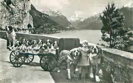 Chiens Attelage De St Bernard   AB 262 - Hunde