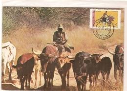 Botswana & Postal, Trekking Cattle Near Kang  1985 (4332) - Botswana