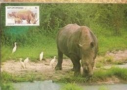 Botswana & Postal, Fauna, Rinoceronte,  Rhinocerontidae, Ceratotherium Simum,  Harare 1983 (3755) - Botswana