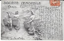 VIGNES, VIN  -  SOCIETE OENOPHILE PARIS - Circulé En 1910 - Sculphotogravure C. SOHET & Cie, Paris - T.B.E. - Vignes