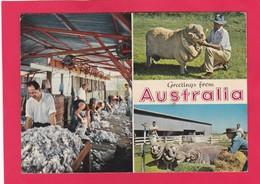 Modern Post Card Of Greetings From Australia,L58. - Australien
