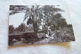 LA CUEILLETTE DES DATTES ....TUNISIE ... - Agriculture
