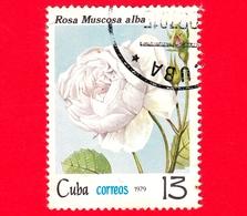 CUBA - Nuovo Obl. - 1979 - Fiori - Rose - Rosa Muscosa Alba - 13 - Nuovi