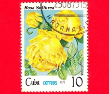 CUBA - Nuovo Obl. - 1979 - Fiori - Rose - Rosa Sulfurea - 10 - Nuovi