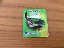 """Magnet Petit écolier """"Milan Royal, Auvergne"""" (oiseau, Rapace) - Magnets"""