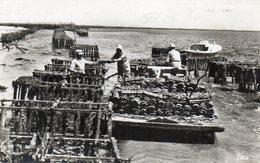 Bassin D Arcachon   Collecteur D Huitres  Enlevement Des Tuiles - France