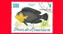 CUBA - Nuovo Obl. - 1985 - Pesci - Vita Marina - Fish - Centropyge Argi - Pesce Angelo - 1 - Cuba