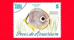 CUBA - Nuovo Obl. - 1985 - Pesci - Vita Marina - Fish - Chaetodon Capistratus - Pesce Farfalla - 5 - Cuba