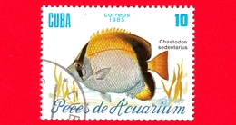 CUBA - Nuovo Obl. - 1985 - Pesci - Vita Marina - Fish - Chaetodon Sedentarius - Pesce Farfalla - 10 - Cuba