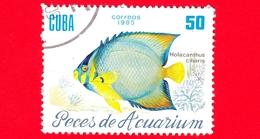 CUBA - Nuovo Obl. - 1985 - Pesci - Vita Marina - Fish - Holacanthus Ciliaris - Pesce Angelo - 50 - Cuba