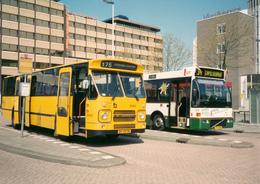 Bus, Omnibus, DAF, Rotterdam, Public Transport, Real Photo - Auto's