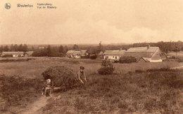 Westerloo - Kipdorpberg - Westerlo