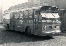 Bus, Omnibus,RET 775, Kromhout- Werkspoor, Rotterdam, Public Transport, Real Photo - Auto's