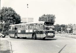 Bus, Omnibus, DAF, RET 614, Charlois, Rotterdam, Public Transport, Real Photo - Auto's