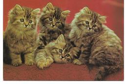 3088u: AK Kätzchen, Gelaufen 1980 In 2460 Bruck An Der Leitha - Katzen