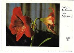 3088i: AK Blumengruß Zum Geburtstag- Gest. Innsbruck 1973 - Blumen