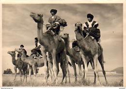 MAROC  GOULIMINE  Sud Marocain  Méharistes.......Le Maroc Artistique N°532 - Marocco